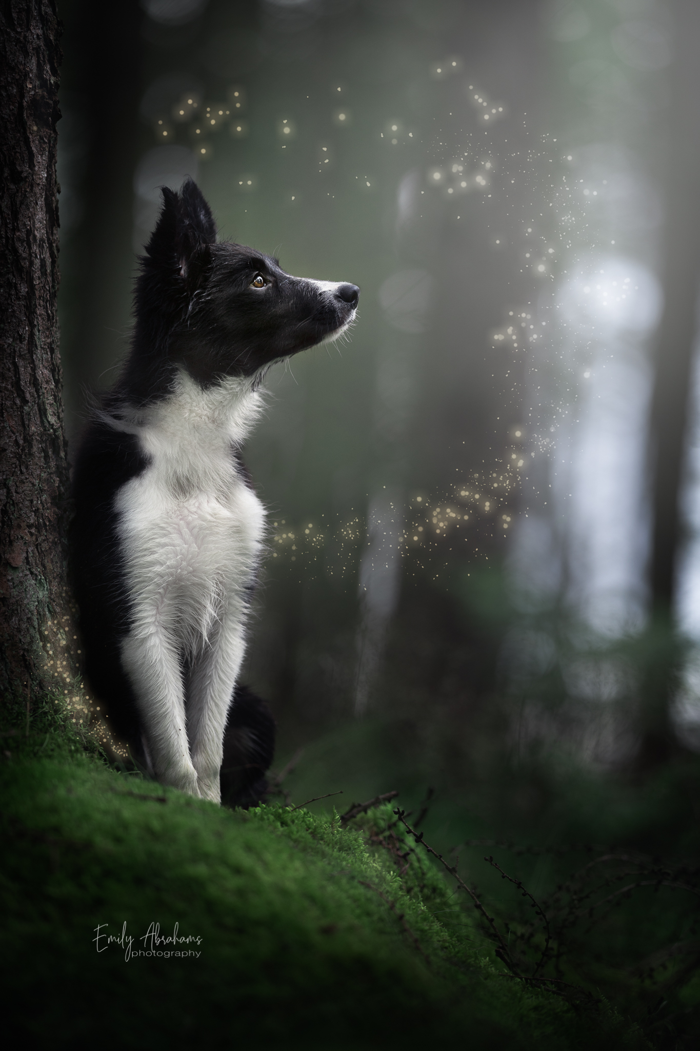 A dark and moody photo of a border collie puppy in the forest, surrounded by magical sparkles