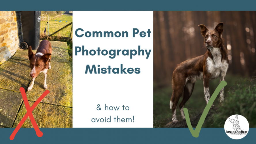 Common pet photography mistakes (and how to avoid them!)