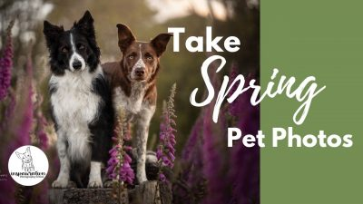 How to Take Spring Photos of your Pet in the Flowers
