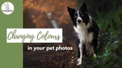 Changing the Colours in your Pet Photos