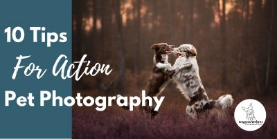 10 Tips For Action Pet Photography