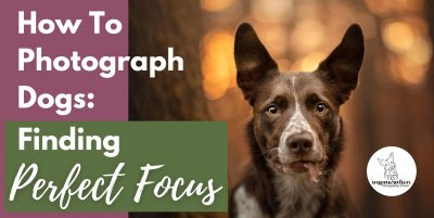 How To Photograph Dogs: Finding Perfect Focus