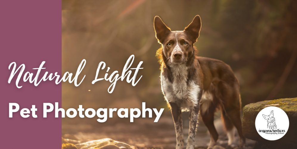 Using Natural Lighting in Pet Photography