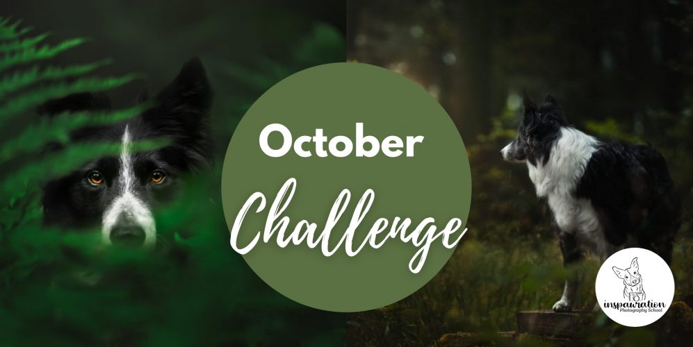 The October Challenge - Capturing Detail & Opening Out